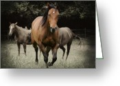 Running Horse Greeting Cards - Charlie and friends Greeting Card by Jana Goode