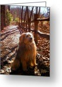 Rail Fence Greeting Cards - Charlie Greeting Card by Doug Kreuger