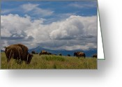 Bison Range Greeting Cards - Charlie Russel Clouds Greeting Card by Katie LaSalle-Lowery