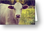 Charolais Greeting Cards - Charolais II Greeting Card by Ashley Walker