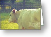 Charolais Greeting Cards - Charolais III Greeting Card by Ashley Walker