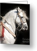 Charro Greeting Cards - Charro Stallion Greeting Card by Jim and Emily Bush
