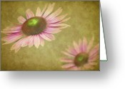 Cone Flower Greeting Cards - Chase Me Greeting Card by Rebecca Cozart