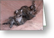 Cougar Greeting Cards - Checking It Out Greeting Card by Sandra Bronstein