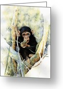 Chimpanzee Greeting Cards - Cheeky Greeting Card by Roger Bonnick