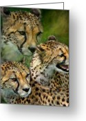 Animal Art Giclee Mixed Media Greeting Cards - Cheetah Moods Greeting Card by Carol Cavalaris