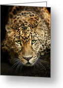 Cats Greeting Cards - Cheetaro Greeting Card by Big Cat Rescue