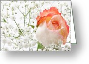 Pastel Roses Greeting Cards - Cherish Greeting Card by Andee Photography