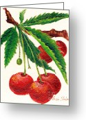 Fine Art - Still Lifes Greeting Cards - Cherries on a Branch Greeting Card by Enzie Shahmiri