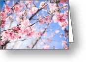 Pink Flower Branch Greeting Cards - Cherry Blossom Greeting Card by Ananda Zanini Fotografias