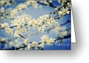 Flower Blossom Greeting Cards - Cherry Blossom Flower Greeting Card by Gualtiero Boffi