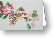 Pink Flower Branch Drawings Greeting Cards - Cherry Blossom Greeting Card by Glenda Zuckerman