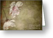 Pollen Greeting Cards - Cherry Blossom Greeting Card by Meirion Matthias