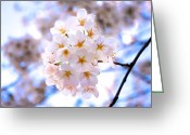 Pink Flower Branch Greeting Cards - Cherry Blossom On Branch Greeting Card by Japan from my eye