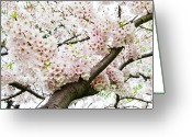 Oriental Flower Greeting Cards - Cherry Blossom Greeting Card by Sky Noir Photography by Bill Dickinson