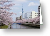 Blossom Photo Greeting Cards - Cherry Blossom Trees Along River, Tokyo. Greeting Card by I.Hirama