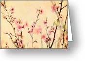 Chic Greeting Cards - Cherry Blossoms Greeting Card by Kim Fearheiley
