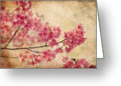 Pink Greeting Cards - Cherry Blossoms Greeting Card by Rich Leighton