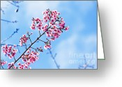 Bright Sky Pyrography Greeting Cards - Cherry blossoms sakura Greeting Card by Chaloemphan Prasomphet