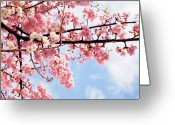 Pink Flower Branch Greeting Cards - Cherry Blossoms Under Blue Sky Greeting Card by Neconote
