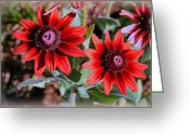 Plants Greeting Cards Greeting Cards - Cherry Brandy Rudbeckia Greeting Card by Kay Novy