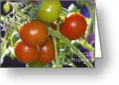Clump Greeting Cards - Cherry Tomatoes on the Vine Greeting Card by Sharon  Talson