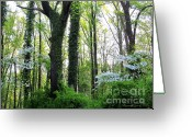 Oldgrowth Greeting Cards - Chesapeake Oldgrowth Forest Greeting Card by Joshua Bales
