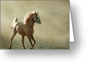 On The Move Greeting Cards - Chestnut Arabian Horse Greeting Card by Christiana Stawski