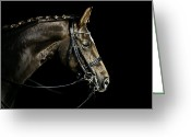 Dressage Photo Greeting Cards - Chestnut Dressage Horse Groomed For A Contest Greeting Card by Anja Hild