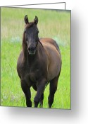 Quarter Horse Greeting Cards - Chestnut Mare Greeting Card by Karon Melillo DeVega