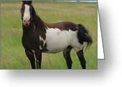 Quarter Horse Greeting Cards - Chestnut Overo Paint Stallion Greeting Card by Karon Melillo DeVega