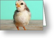 Beginnings Greeting Cards - Chick On Wood Greeting Card by Retales Botijero
