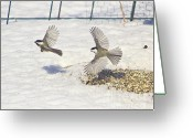 Snow Posters Greeting Cards - Chickadee-6 Greeting Card by Robert Pearson