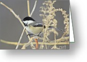 Snow Prints Greeting Cards - Chickadee-8 Greeting Card by Robert Pearson