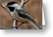 Natures Beauty Greeting Cards - Chickadee Bird Greeting Card by Debra     Vatalaro