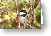 Little Bird Greeting Cards - Chickadee Greeting Card by David  Naman