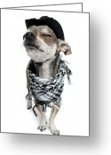 Cowboy Hat Photo Greeting Cards - Chihuahua Wearing A Scarf And A Cowboy Hat Greeting Card by Life On White