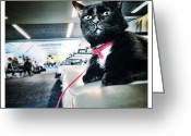 Petstagram Greeting Cards - Chillin In The Airport Greeting Card by Natasha Marco