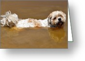 Dirty Dog Greeting Cards - Chillin in the Muddy Pond Greeting Card by Diane Allen