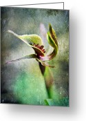 Exotic Flora Greeting Cards - Chiloglottis Greeting Card by David Lade