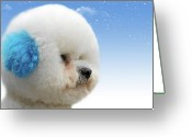 Bichon Greeting Cards - Chinas latest craze - Dyeing pets Greeting Card by Christine Till