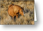 Domestic Animal Photo Greeting Cards - Chincoteague Pony Greeting Card by Bill Swindaman