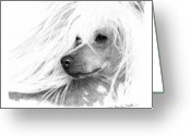 Graphite Drawings Greeting Cards - Chinese Crested dog Greeting Card by Monika Stattner