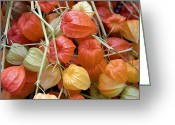 Seasonal Greeting Cards - Chinese lantern flowers Greeting Card by Jane Rix