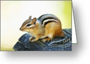 Log Greeting Cards - Chipmunk Greeting Card by Elena Elisseeva