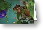 Morning Glory Greeting Cards - Chipmunk in the Morning Glory Vine Greeting Card by Marjorie Imbeau