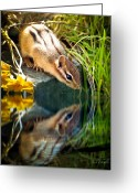 Tree Photo Greeting Cards - Chipmunk Reflection Greeting Card by Bob Orsillo