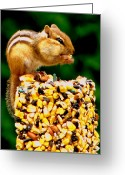 Feeding Mixed Media Greeting Cards - Chipmunk Take Out Greeting Card by Ms Judi