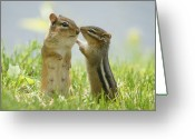 Two Animals Greeting Cards - Chipmunks In Grasses Greeting Card by Corinne Lamontagne