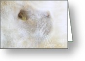 Cat Profile Greeting Cards - Chloe Greeting Card by Jan Pudney